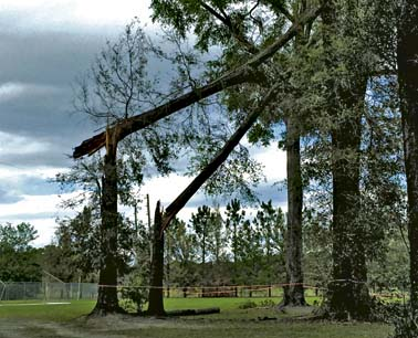 HS downed tree 4997
